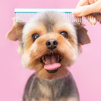 Dog Grooming ACCREDITED BY CPD
